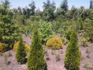 Декоративні рослини з власного розсадника