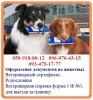 Оформление документов на животных - быстрое оформление. Ветеринарная с...