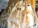 выделки шкур пушных животных