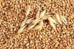Продам пшеницу title=
