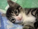 Шустрый котёнок Цезарь