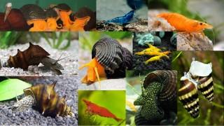 Рыбки для зоомагазинов