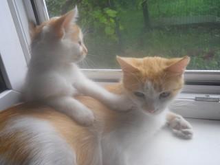 Котята ждут встречи с заботливыми хозяевами. title=
