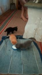 Отдам котят title=