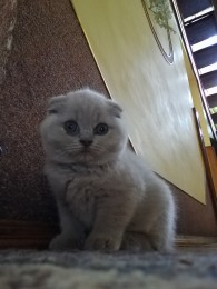 Продам котяток title=