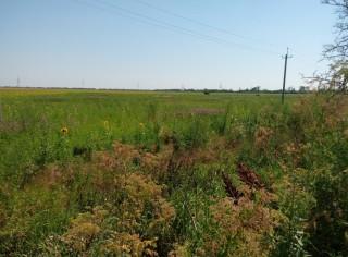 АРЕНДА земельных участков, Одесская область