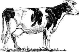 Продам корову title=