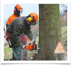 Сезонная обрезка деревьев. Валка деревьев. title=
