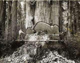 Валка, спил, удаление деревьев. Сезонная обрезка садовых деревьев. title=