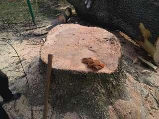 Обрезка и валка деревьев