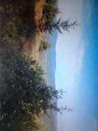 Земельна ділянка в Східниці. title=