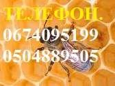 Потрібен Заготівельник продуктів бджільництва по Миколаївській обл. title=