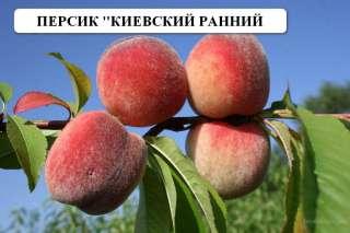 Саженцы title=