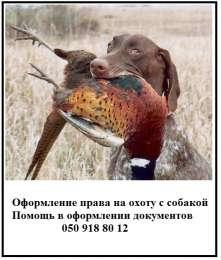Документы для охотничьих собак — решаем вопросы с оформлением title=