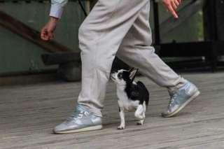 Коррекция поведения, послушание, дрессировка, выгул собак