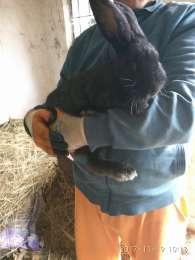Кролики title=