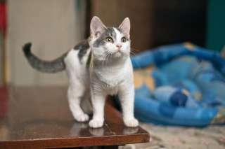 Серенькая! Не покупай котенка - возьми из приюта !  title=