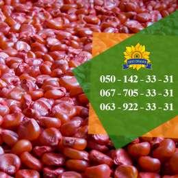 Насіння кукурудзи Оржиця 237 МВ від ПБФ «Колос» title=