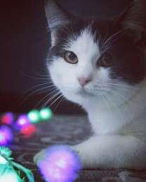 Чудесные котики - в хорошие руки! Не покупай, возьми из приюта!  title=