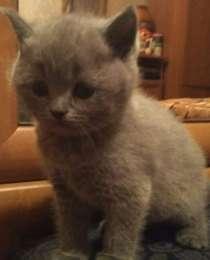 Маленькі грайливі кошенята title=