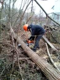 Обрезка сада - профессиональная обрезка деревьев