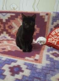 Чёрный кот в добрые руки. Срочно  title=