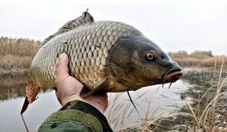 Живая товарная рыба: карп (зеркальный), белый амур, толстолоб. title=