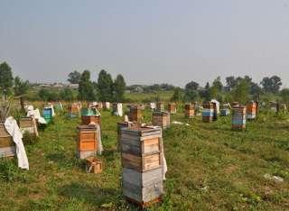 Пасека, пчелы, пчелосемьи, пасіка, бджоли, бджолосім'ї title=