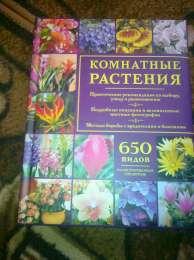 комнатние растения title=