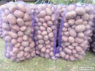 Продам смачну, екологічно чисту картоплю харчову та насіннєву. title=