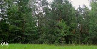 Димер, 8 га, ОСГ,  біля лісу title=