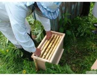 продам бджолопакети title=