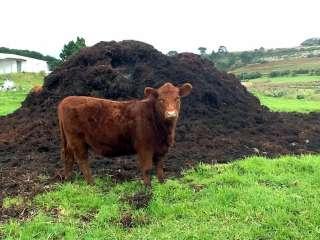 Навоз. Коровия перегной. Навоз коровячий. Чернигов title=