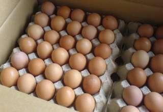 Продам инкубационные яйца адлера серебристого