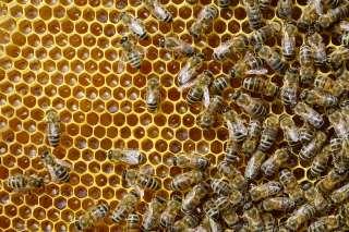 Продам бджоли карпатської породи.  title=