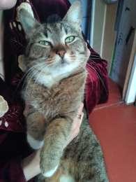 Ищу заботливых хозяев для домашней кошки. title=
