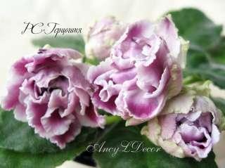 Фиалки сортовые Киев, детка РС-Герцогиня - огромные красивые цветы
