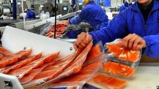 Набираем людей на производство лосося .СРОЧНО! title=