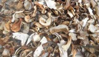 белые сушенные грибы/білі сушені гриби