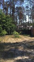 Участок в Буче 10 соток, лес