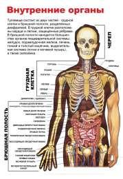 Плакаты по Анатомии и медицине