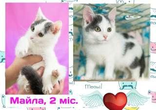 Зеленоглазая малышка (котеночек Майла, 2 месяца)