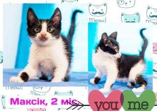 Черно-белый котеночек Максик ищет дом (2 месяца)