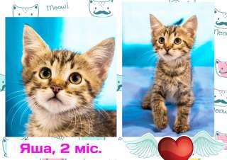 Чудесный полосатый котенок ищет себе дом (2 месяца, Яша, кот)