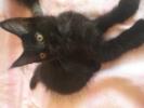СРОЧНО котята Мейнкун-Кун