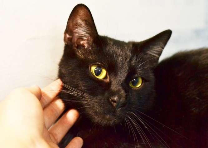 Томас, чёрный котик с желтыми глазками, 8 месяце