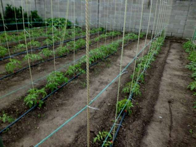 Опоры для подвязки помидоров