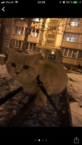 Кот ищет подружку