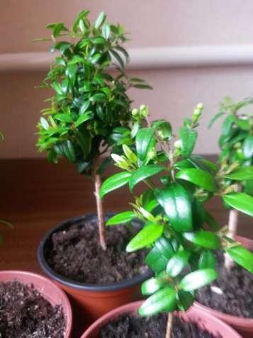 54da29b78 Комнатные растения. Купить комнатные цветы: продажа комнатных ...
