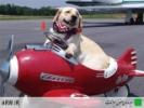 Оформление ветеринарных документов и отправка  животных за границу